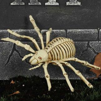 Scheletro di ragno cm 24